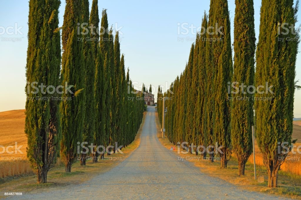 Countryside landscape around Pienza Tuscany in Italy, Europe stock photo