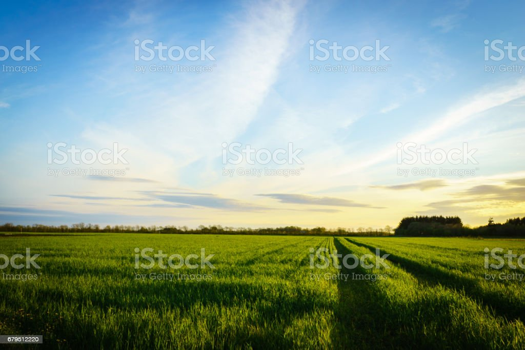 countryside landscape - green grain farm field in spring royalty-free stock photo