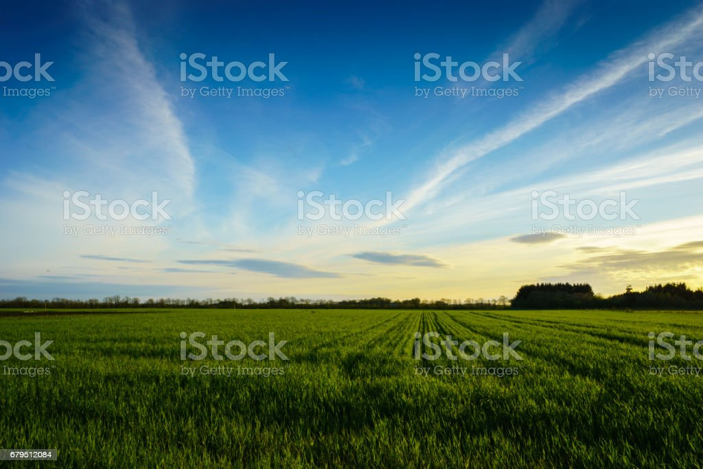 countryside landscape - green grain farm field royalty-free stock photo