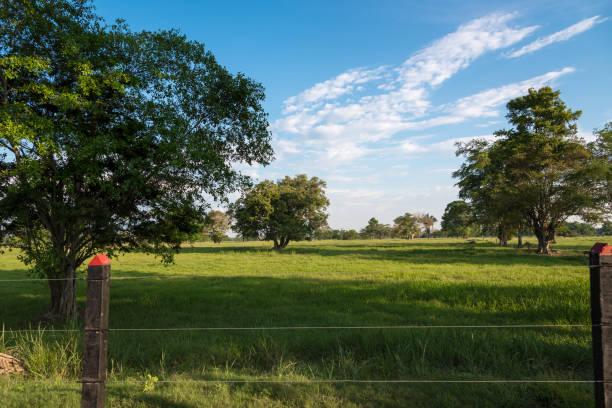 Landschaft in der Rinderfarm in Kolumbien – Foto