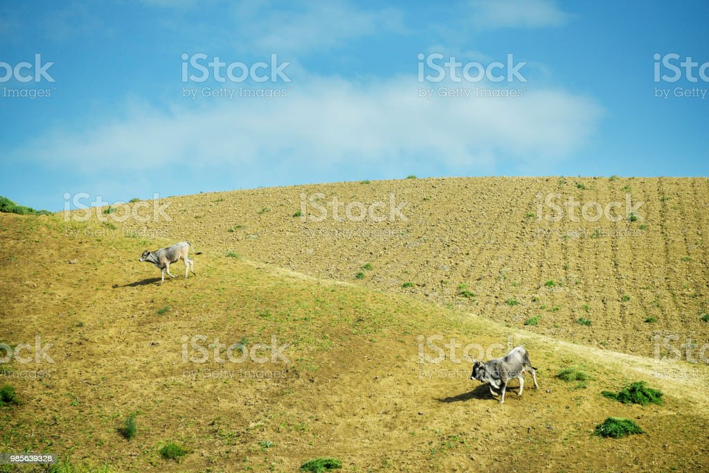 countryside landscape in Val D'Agri, Basilicata - foto stock