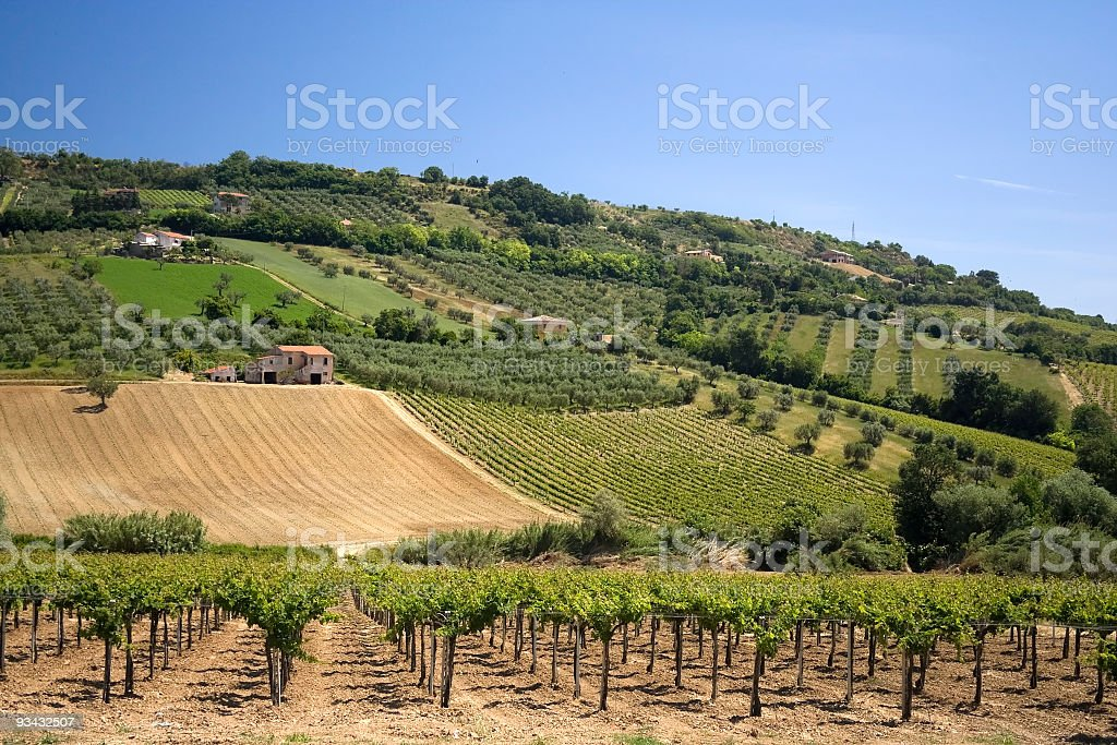 Countryside landscape of well manicured vineyard stock photo