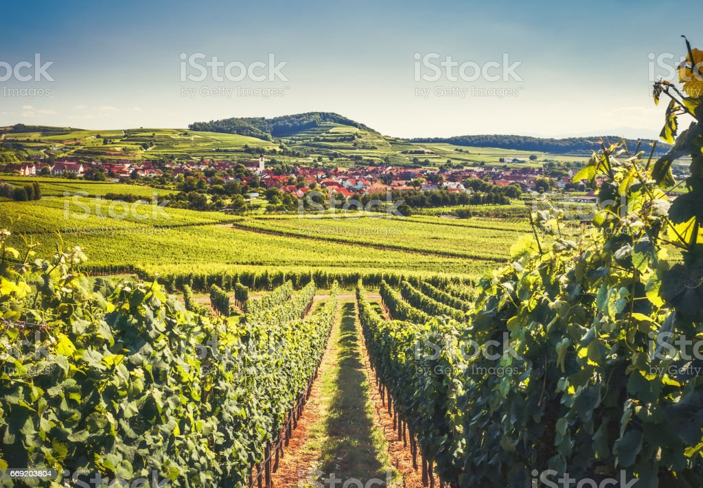 Countryside landscape with a historic village, traditional houses and vineyards. Scenic view of Kaiserstuhl, Germany, Black Forest. – Foto