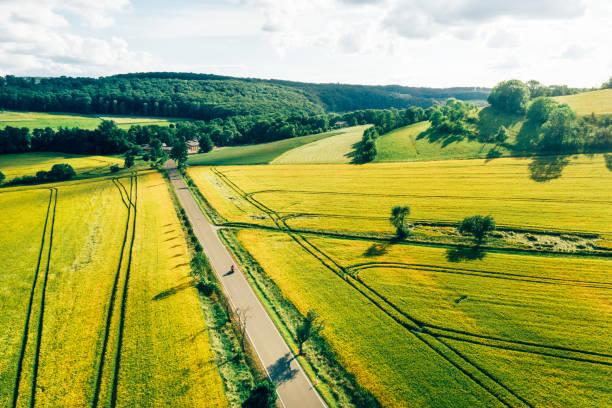 krajobraz wiejski z rzepakiem i zielonymi polami - kapustowate zdjęcia i obrazy z banku zdjęć