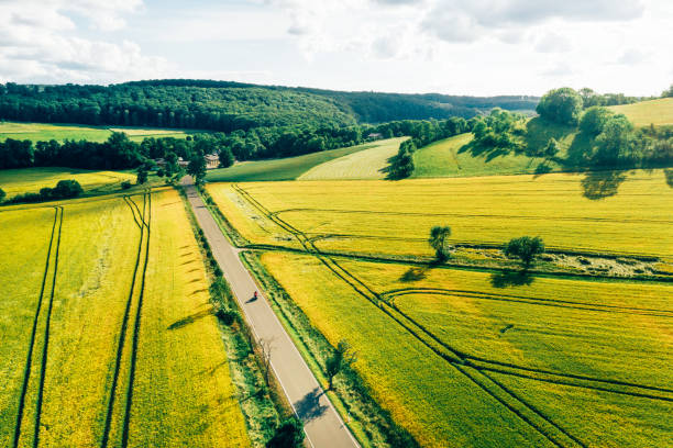 paisaje rural con canola y campos verdes - cruciferae fotografías e imágenes de stock