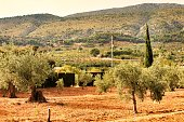Countryside landscape with olive trees and conifers in southern Spain