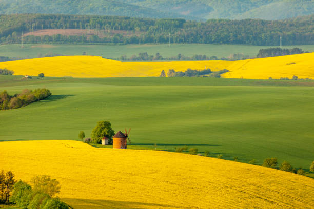 Countryside landscape with windmill and rapeseed field, Moravia, Czech Republic Drone point of view shot of an idyllic countryside landscape with view of the exterior of a traditional windmill and a vibrant yellow rapeseed field, Moravia, Czech Republic brassica rapa stock pictures, royalty-free photos & images