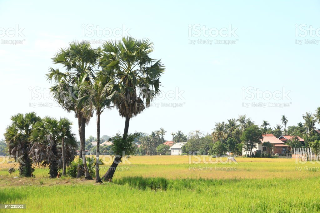 Countryside near Siem Reap, Cambodia stock photo