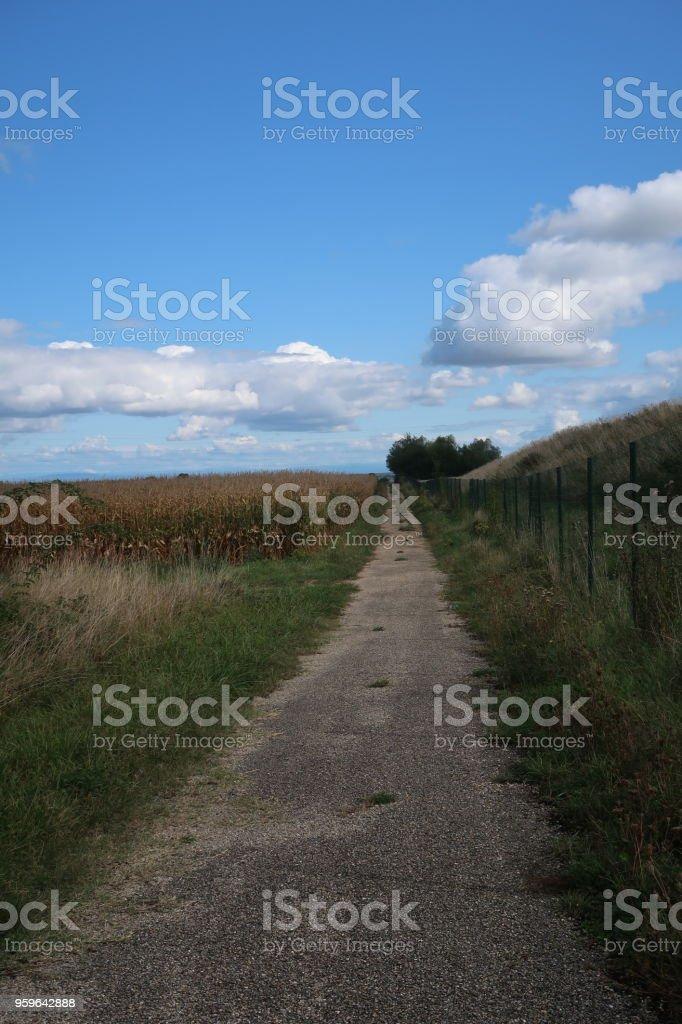 Ruta de campo  - Foto de stock de Agricultura libre de derechos