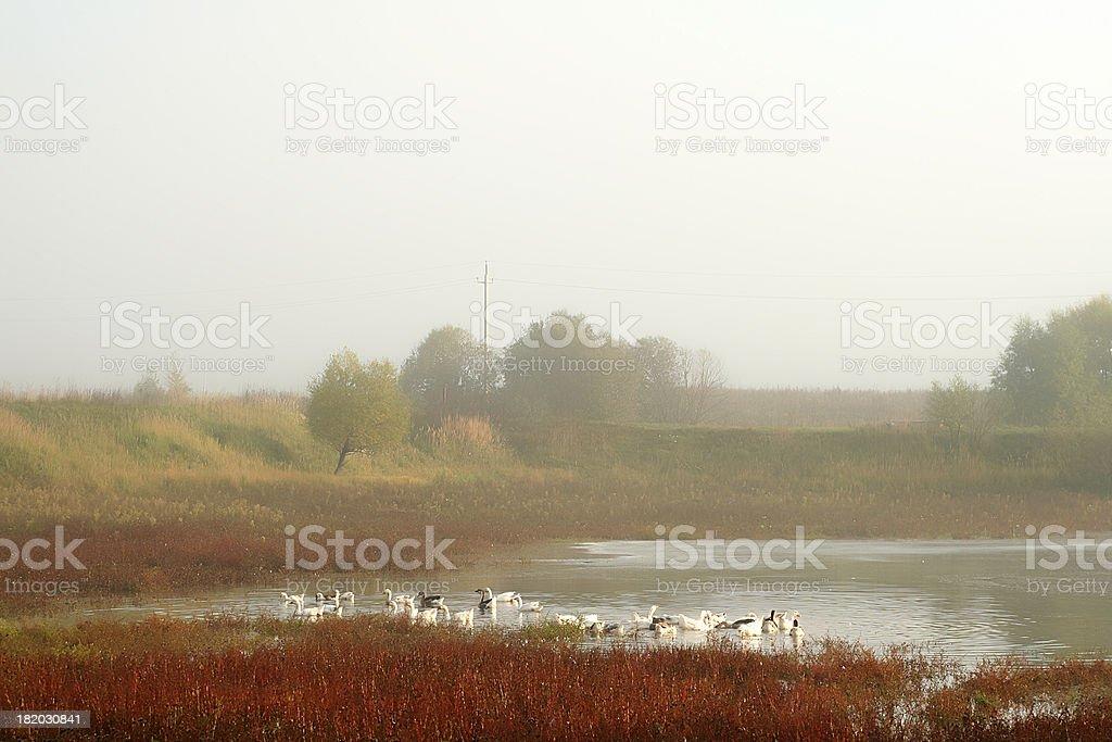 Countryside royalty free stockfoto