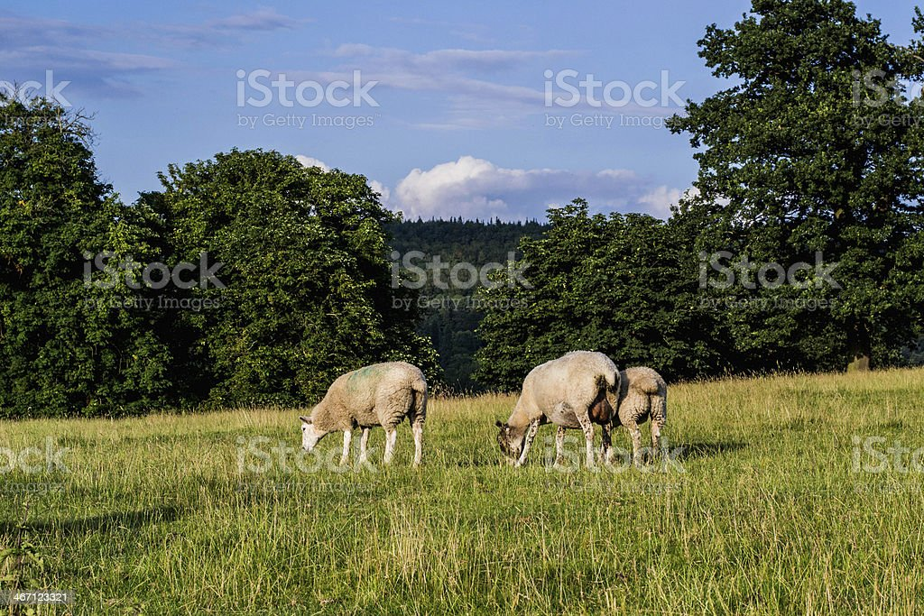 Countryside royalty-free stock photo