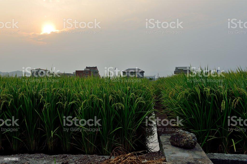 Countryside stock photo