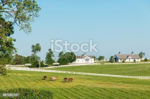 Green pastures of horse farms. Country summer landscape.Green pastures of horse farms. Country summer landscape.