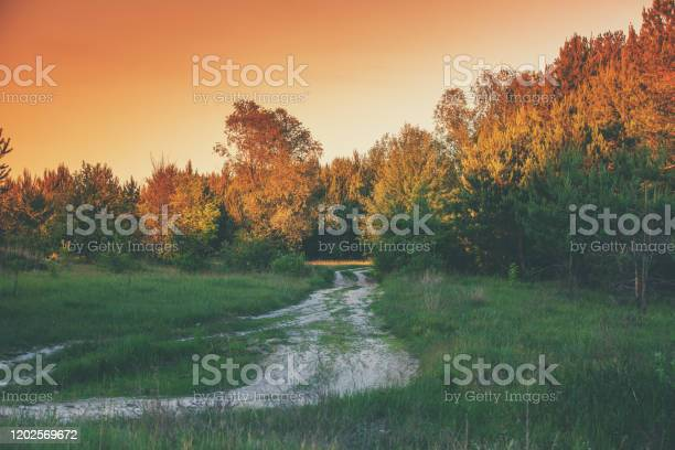 Photo of Countryside, rural landscape with forest and road at sunset light. Country dirt road in the evening
