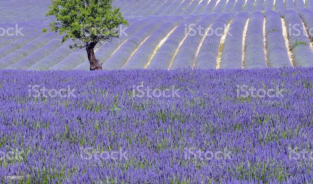countryside scenic in provence stock photo