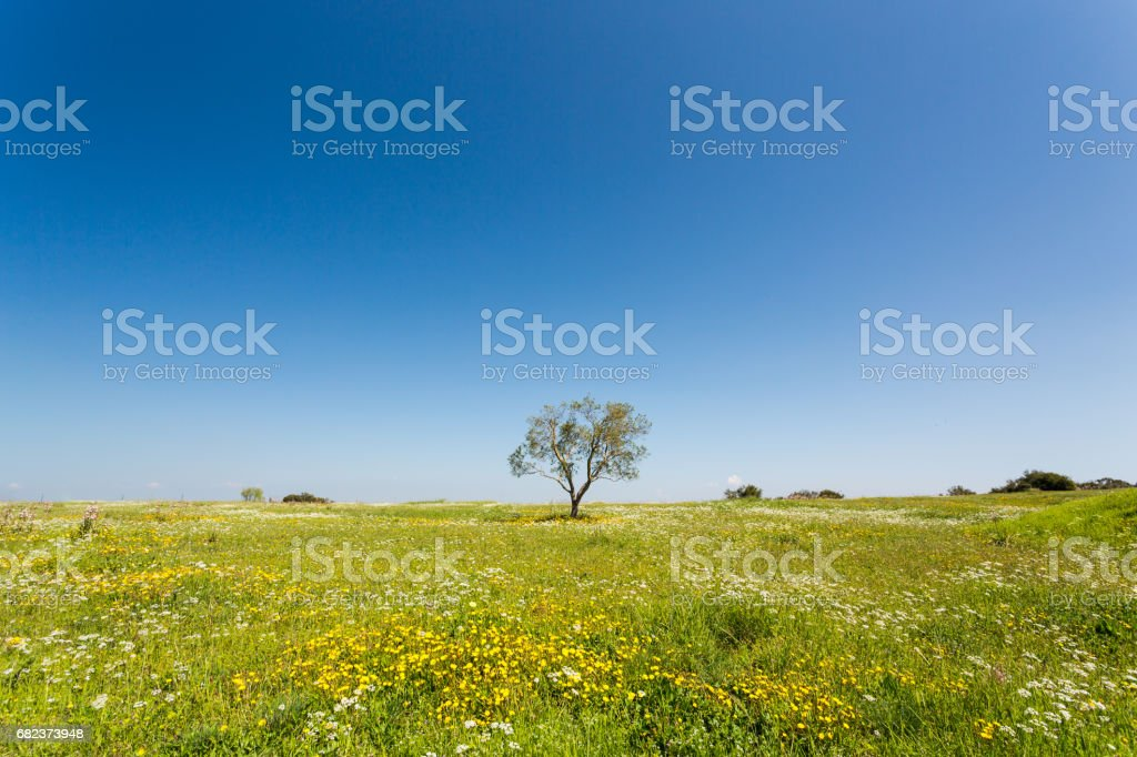 Countryside - Tarquinia foto stock royalty-free