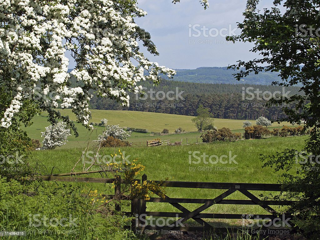 Countryside View royalty-free stock photo