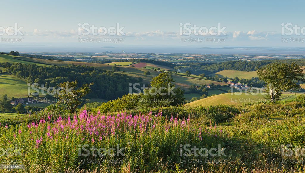 Countryside view to Hinkley Point Nuclear Power station pink flowers stock photo