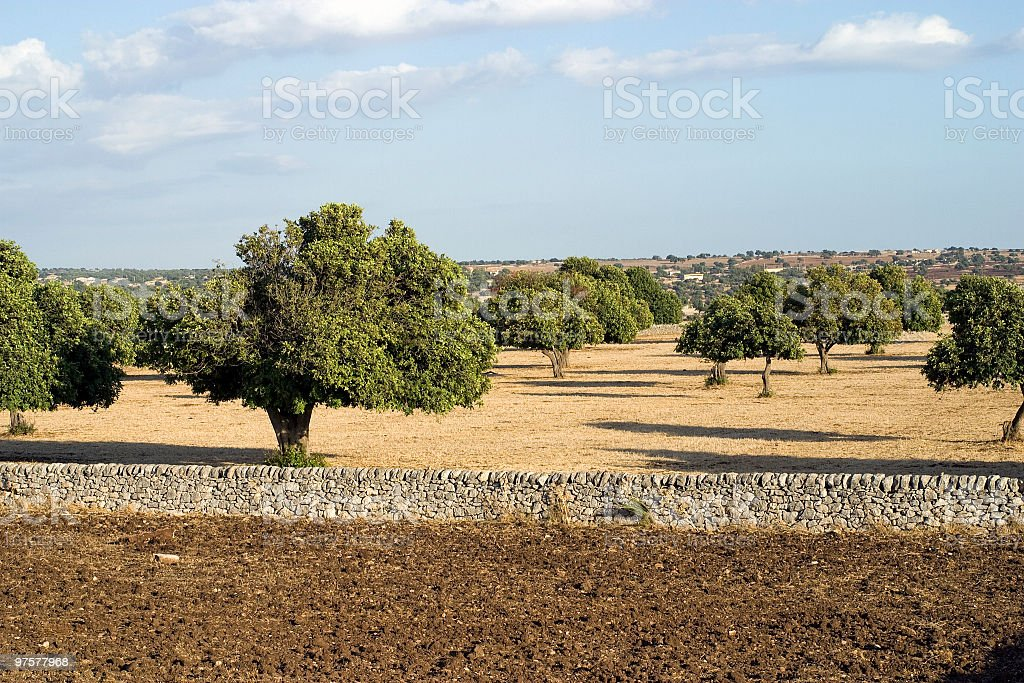 countryside with trees Carrubbo royalty-free stock photo