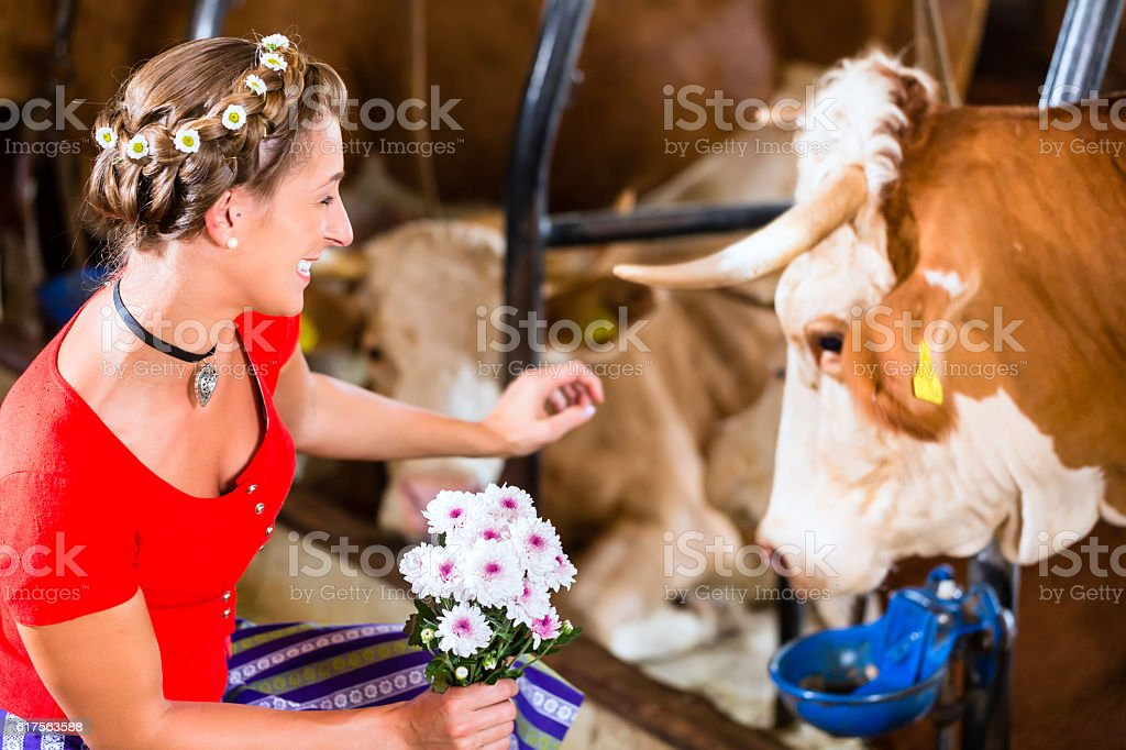 Countrywoman touching cow in cowhouse stock photo