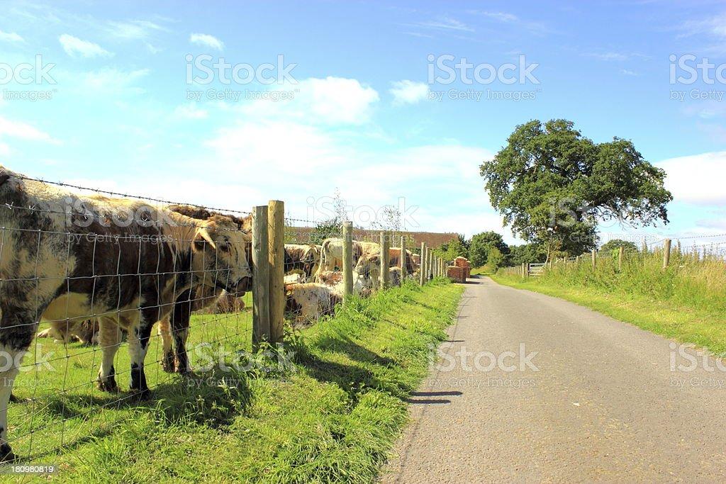 county road stock photo