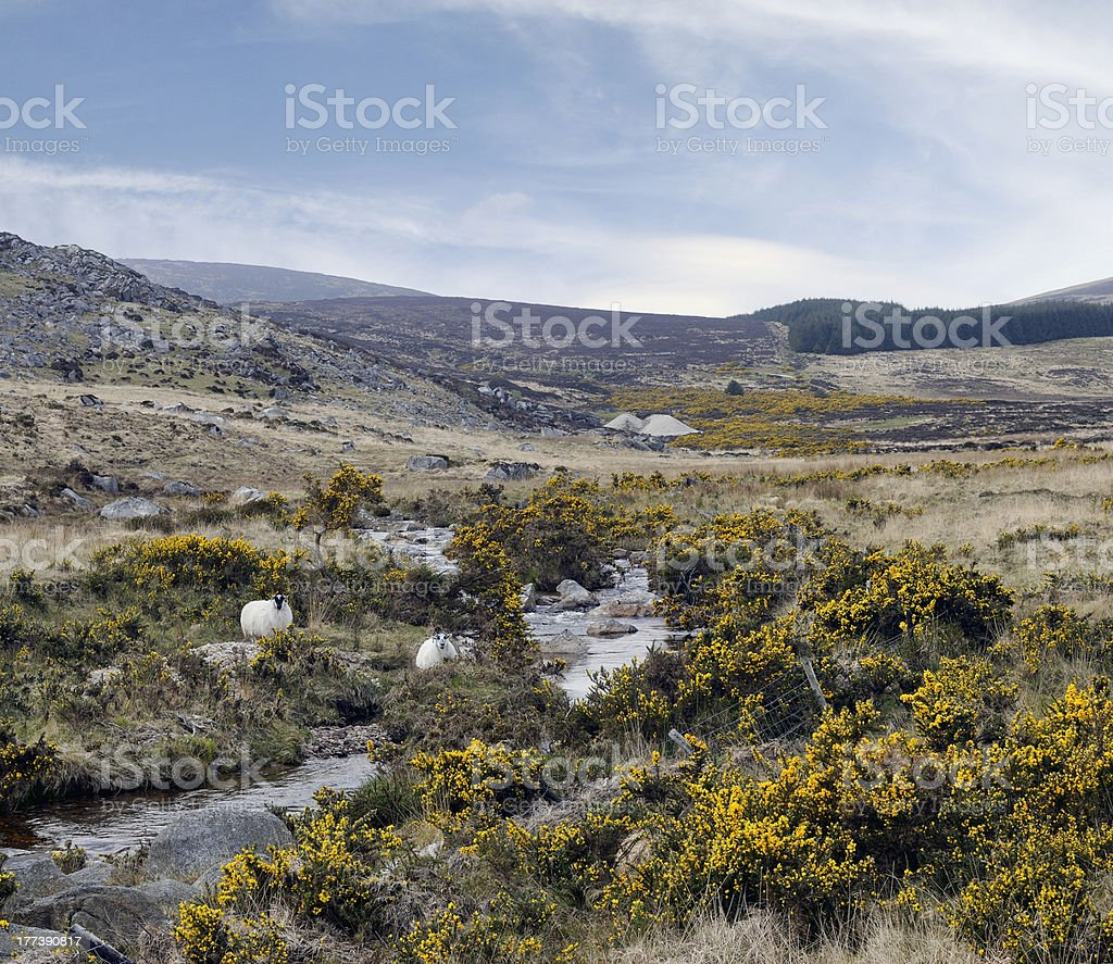 County Wicklow mountains, cheep royalty-free stock photo