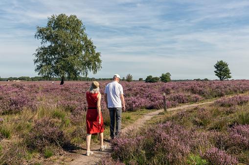 Couple at hiking trail through Dutch blooming purple heath