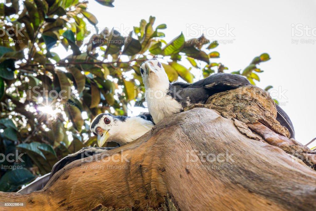 Couple birds in sunlight stock photo