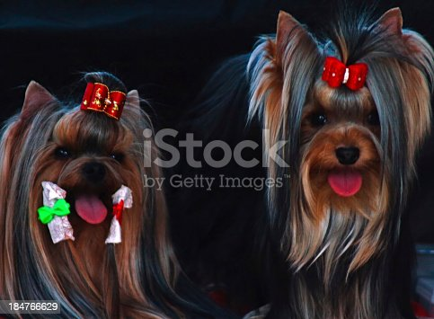istock Couple canine 184766629