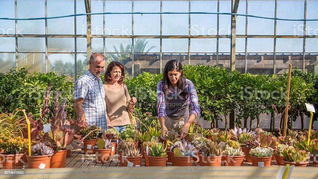 Couple chosing plants in garden center stock photo