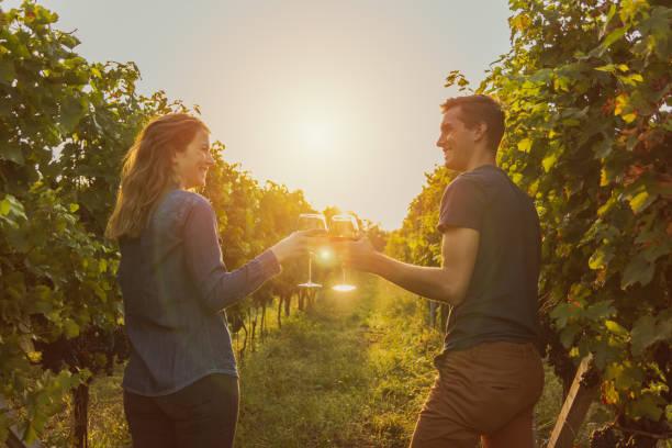 paar, klirren rotweinglas in einem weinberg während des sonnenuntergangs. - romantisches picknick stock-fotos und bilder