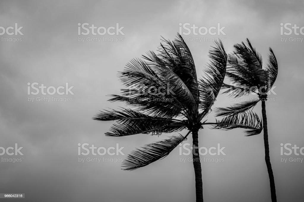 Couple coconut palm tree on rainy day - Стоковые фото Азия роялти-фри