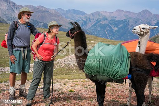 A man and his wife look at two llamas on a rest break at the highest point of the Continental Divide Trail in the San Juan National Forest in Weminuche Wilderness, Rocky Mountains, Silverton, CO, USA
