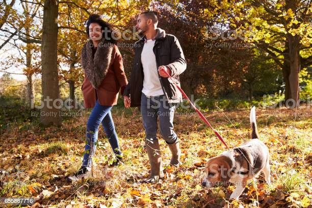 Couple exercising dog in autumn woodland picture id655867716?b=1&k=6&m=655867716&s=612x612&h=dtad07sz wyvpdkylq6w8kcequugzsj6bmhh9fhbu5k=