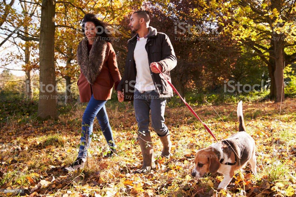 Couple Exercising Dog In Autumn Woodland stock photo