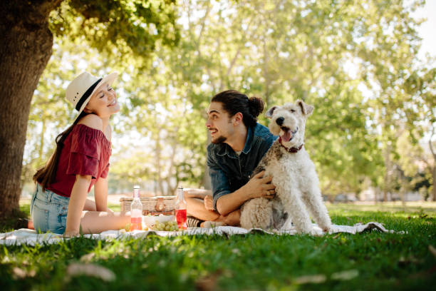 Couple having fun on picnic picture id953467148?b=1&k=6&m=953467148&s=612x612&w=0&h=7heq53cnlkgjci quwgri90bohrjmtfg qjxh2dwp4c=