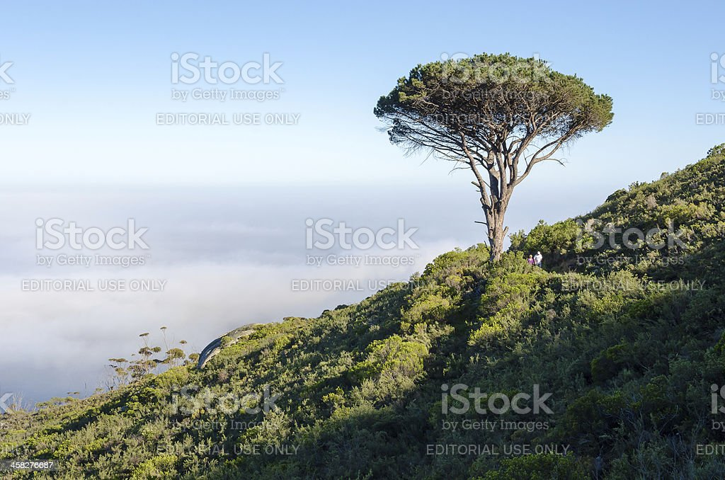 Couple hiking in Cape Town's Nature royalty-free stock photo