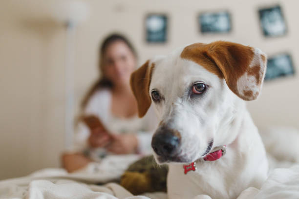 Couple in bed with their pet dog stock photo