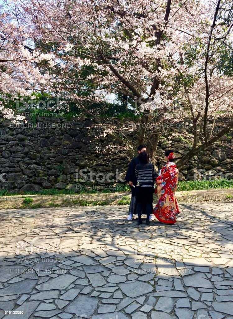 2fcd2524efce Couple in traditional Japanese outfit (Kimono) with beautiful pink asian Sakura  Cherry Blossom flowers blooming (Hanami) in Fukuoka - Stock image .