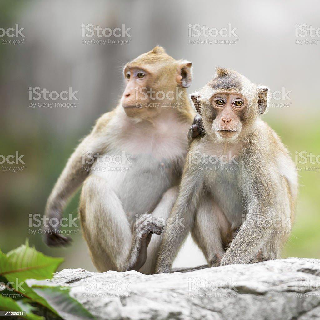 Best shaved monkey