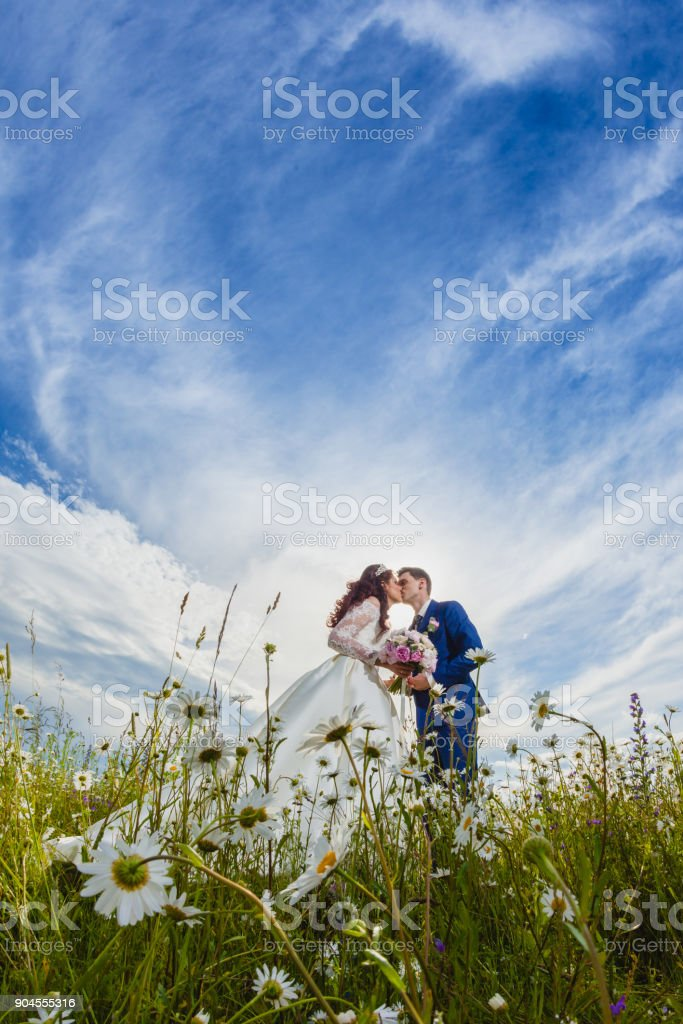 Couple newlyweds in a camomile field stock photo