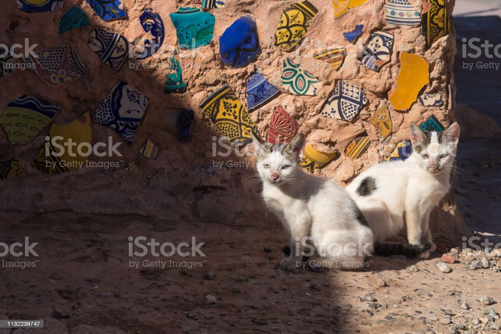 Two similar cats sitting in a sunshine on the street, infront of a...