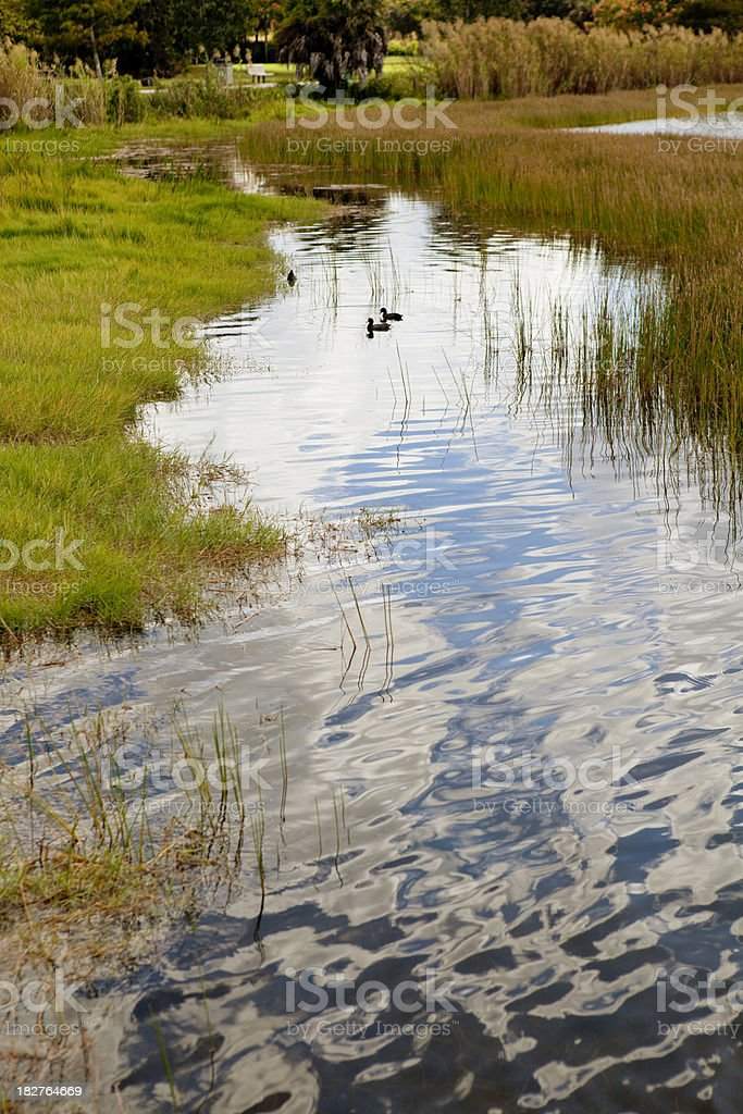 Couple of Coots stock photo