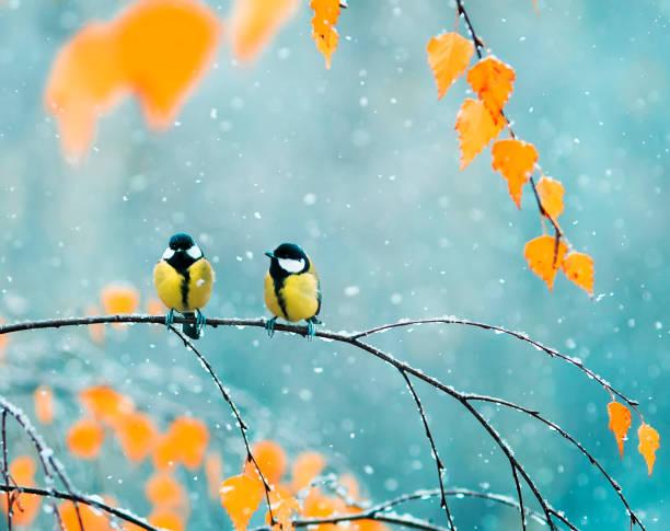 paar leuke vogels tieten in het park zit op een tak onder heldere herfst gebladerte tijdens een sneeuwval - vogel herfst stockfoto's en -beelden