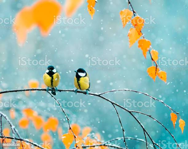 Photo of couple of cute birds Tits in the Park sitting on a branch among bright autumn foliage during a snowfall