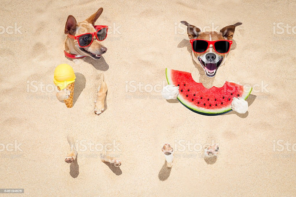 couple of dogs at the beach and watermelon stock photo
