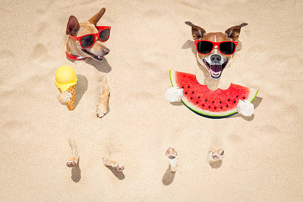 couple of dogs at the beach and watermelon - gömülü stok fotoğraflar ve resimler