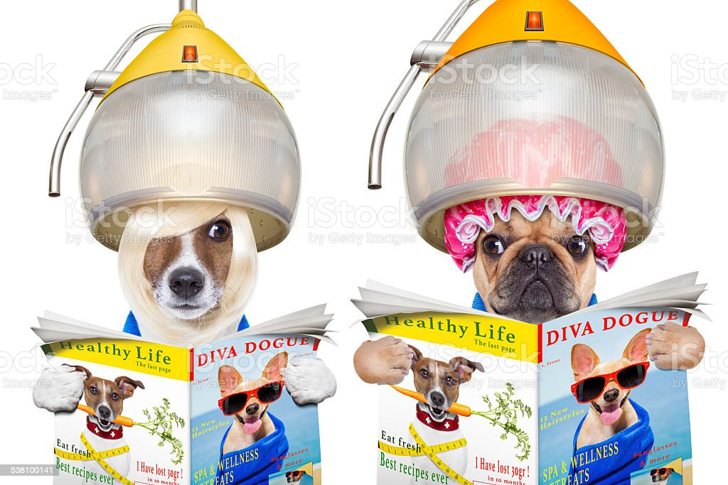 couple of dogs at the  hairdressers stock photo