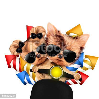 istock Couple of dogs carry firework rockets 815230244