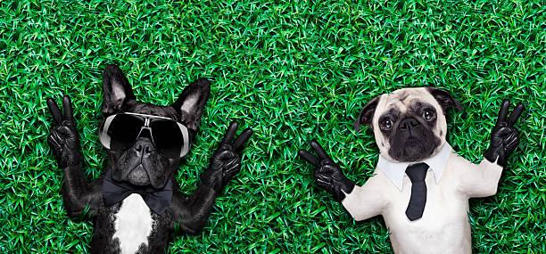 paar hunden - coole liebessprüche stock-fotos und bilder